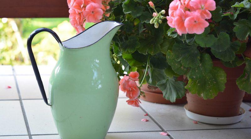 Chyby při zalévání pokojových rostlin