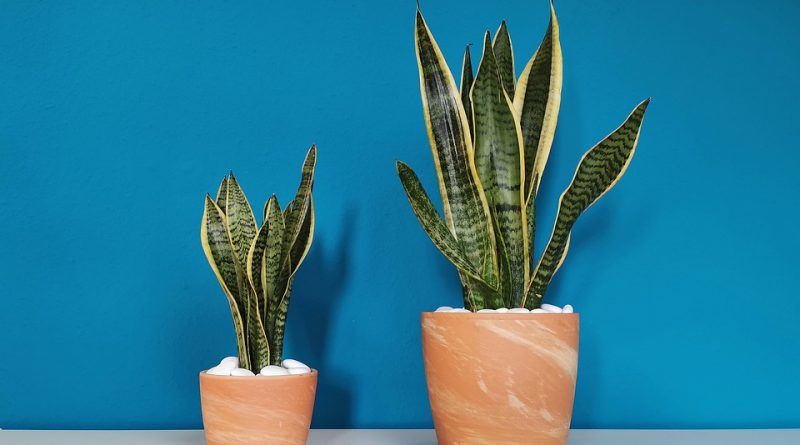 Čím hnojit pokojové rostliny?
