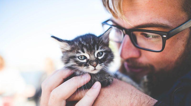 Kočičí mazlíčci