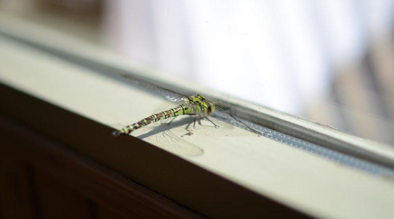 Jak se zbavit nepříjemného hmyzu v domácnosti?