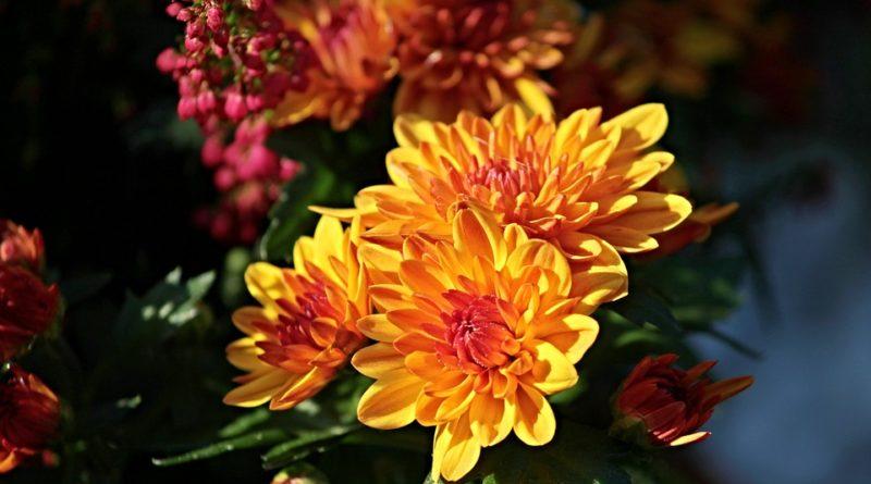 Jaké rostliny vyčistí vzduch od nebezpečných toxinů?