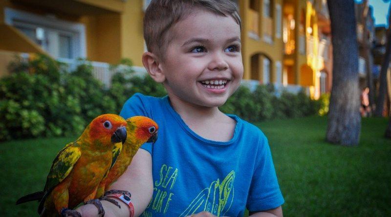 Jakého papouška pořídit dítěti?