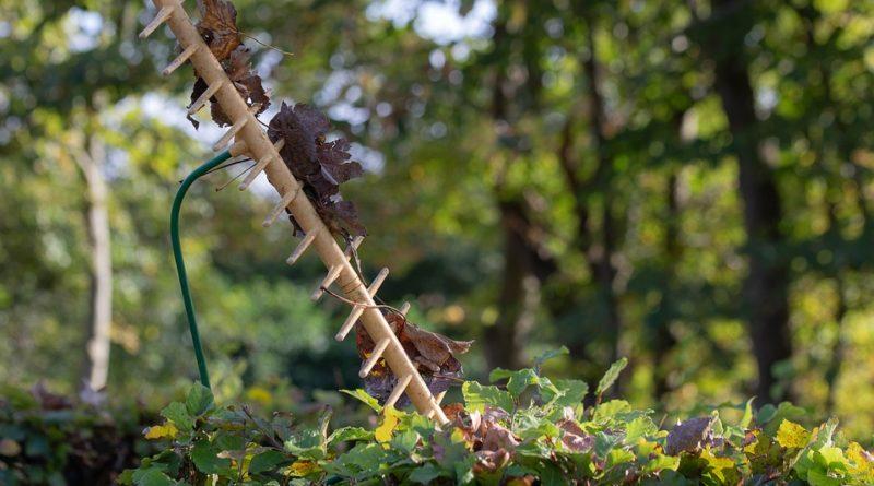 hrabat spadané listí