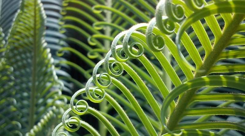 Moderní pokojové rostliny, které zkrášlí váš dům
