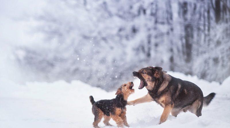 Přečkejte se psem zimu snadno a bez újmy