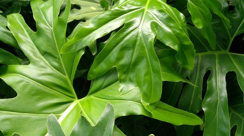 Rostliny do tmavých koutů domu. Jaké to zvládají bez slunce?