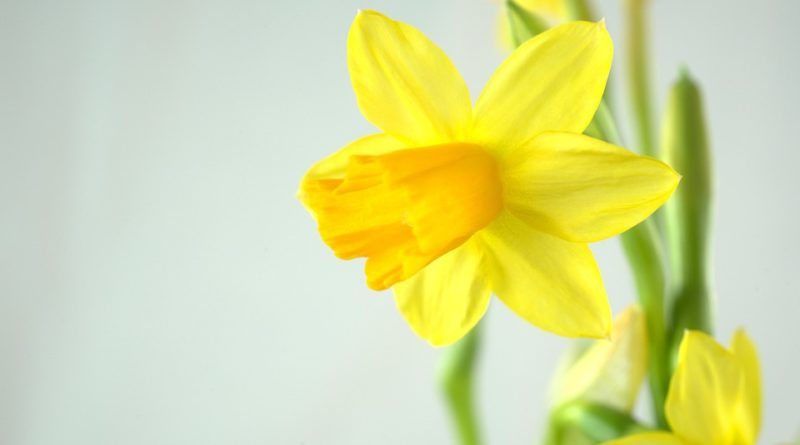 S jarem přichází i jarní květiny. Jaké stojí za pořízení?
