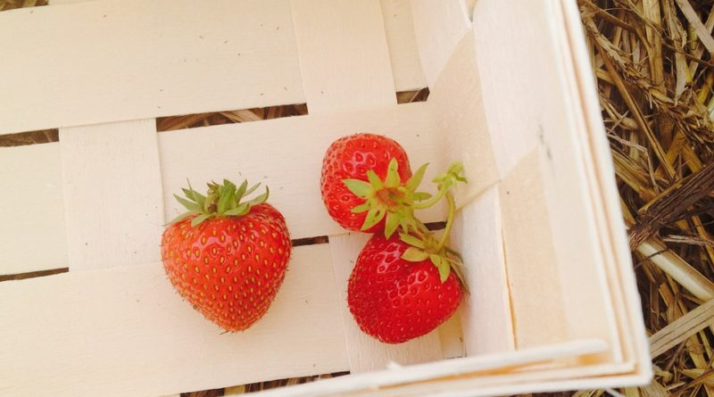 Sezona jahod končí. Jak se o jahodníky po sklizni postarat?