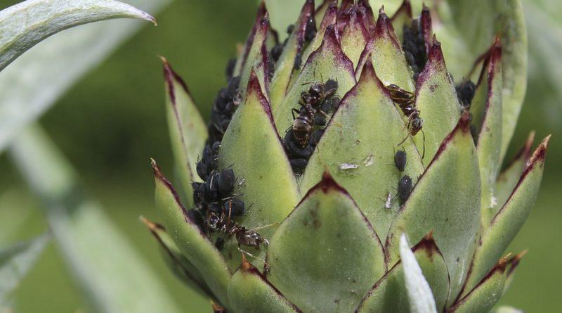 Škůdci, kteří napadají pěstovanou zeleninu na zahradě